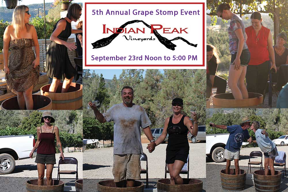 5th Annual Grape Stomp Winemaking Event Promotion Graphic for Indian Peak Vineyards Winery, Manton, CA 96059.