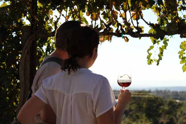 IPV-Manton-Wine-Tasting-Room-Picturesque-View-Couple-Enjoying-the-Afternoon-through-the-Grapevines
