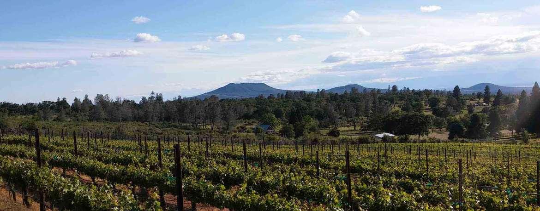 Wine Tasting near Redding Overlooking The Manton Valley AVA, Manton, CA 96059.